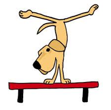 dog on balance beam
