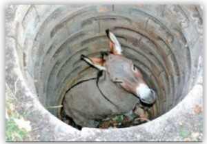 donkey-down-a-well