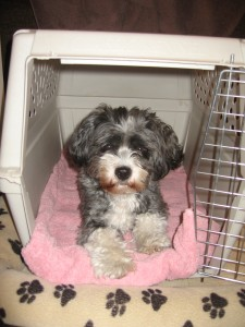 Charlie Bear in Crate 002